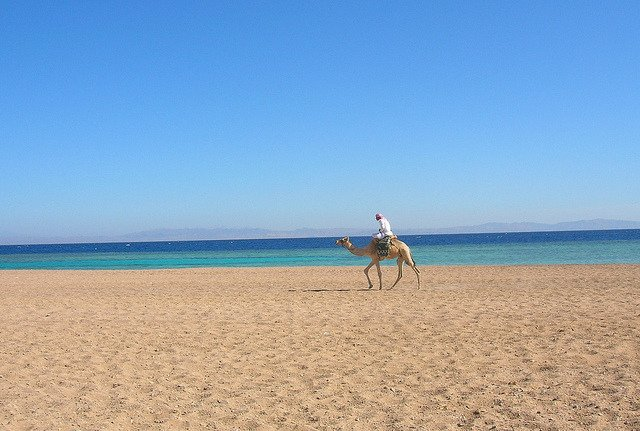 Nomad rides camel on a beach in Egypt